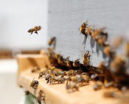 Méhpusztulási esetek jelentése