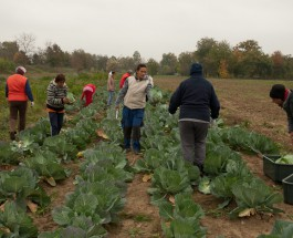 Startmunka – Mezőgazdasági termelés