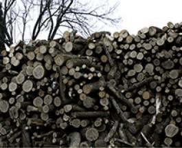 Tájékoztató szociális célú tűzifa támogatásról